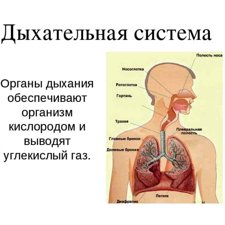Подарочный сертификат на обучение антикороновирусному дыханию