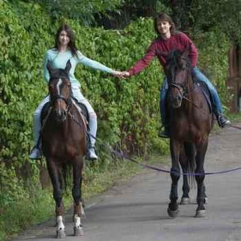 Подарочные сертификаты на катание на лошадях и уроки верховой езды