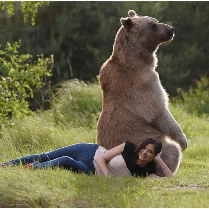 Подарочный сертификат на фотосессию с обученным медведем