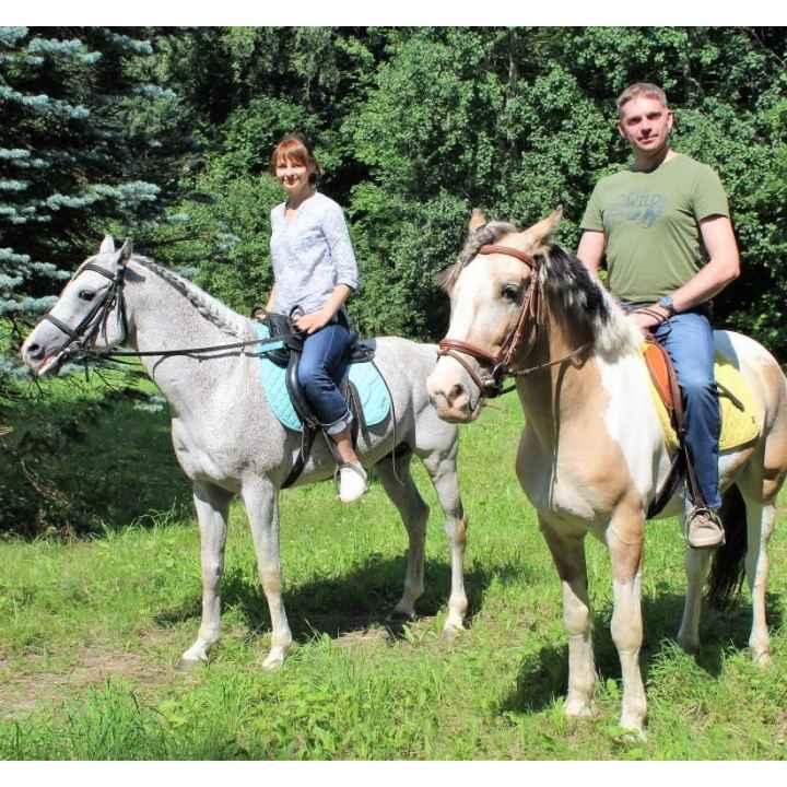 Купить подарочный сертификат на прогулку на лошадях