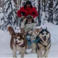 Экскурсия в питомник хаски и катание на собаках в Москве