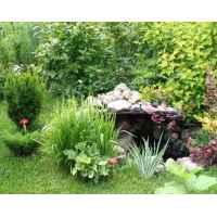 Подарочный сертификат на консультацию «Прекрасный сад»