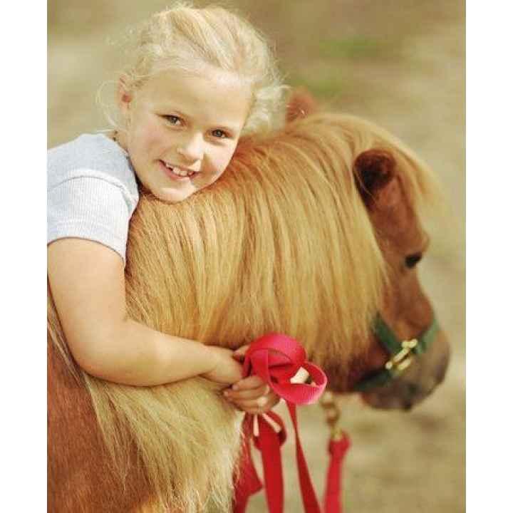 Экскурсия по конюшне и катание на пони для детей