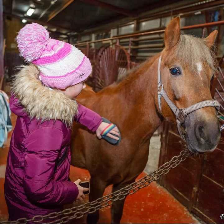 Интерактивные программы для школ и детских садов в конном клубе