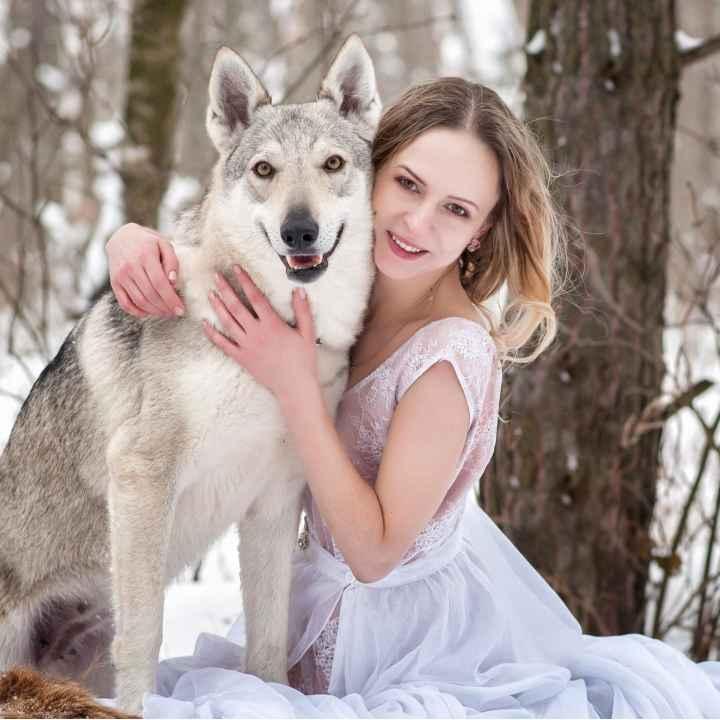 Подарочный сертификат на фотосессию с волком